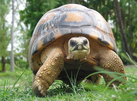 Giant Tortoises - the other residents of Bird Island Seychelles!