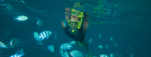 Snorkelling & Diving