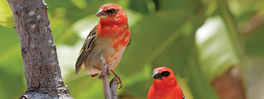 Endemic bird species abound in Seychelles