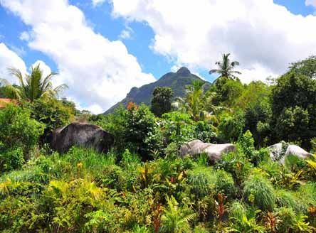 Tropical vegetation surrounds Hanneman Residence Seychelles