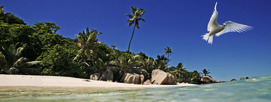 Discover unique landscapes on holidays in Seychelles